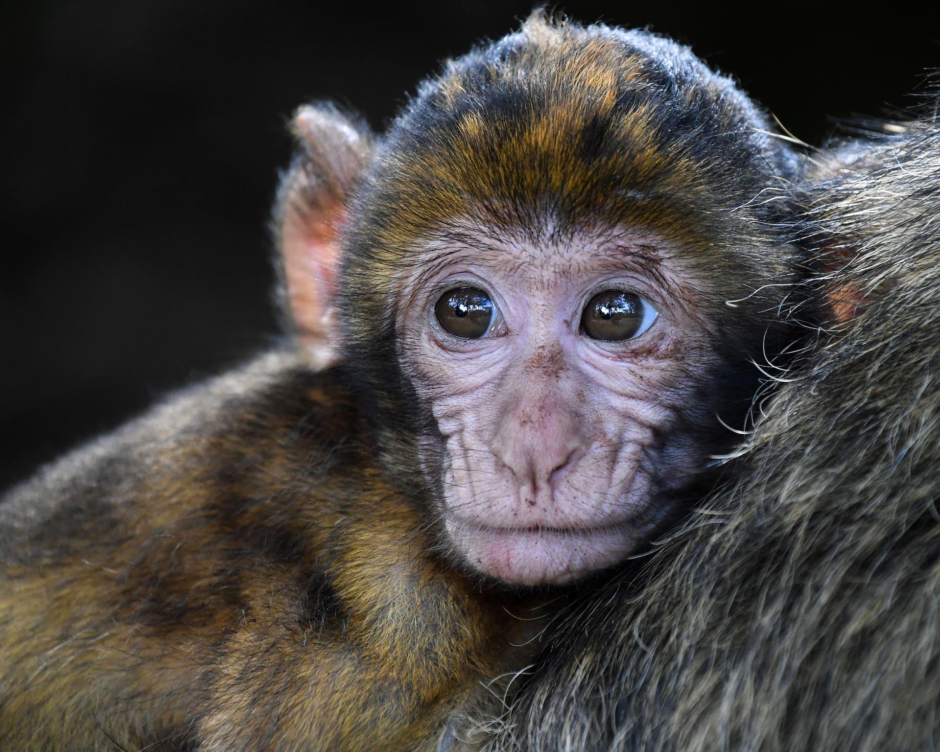 Lee más sobre el artículo ¿Un macaco como mascota? No, gracias