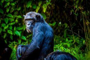 Lee más sobre el artículo Tamaño de instalaciones, senderismo y grandes simios