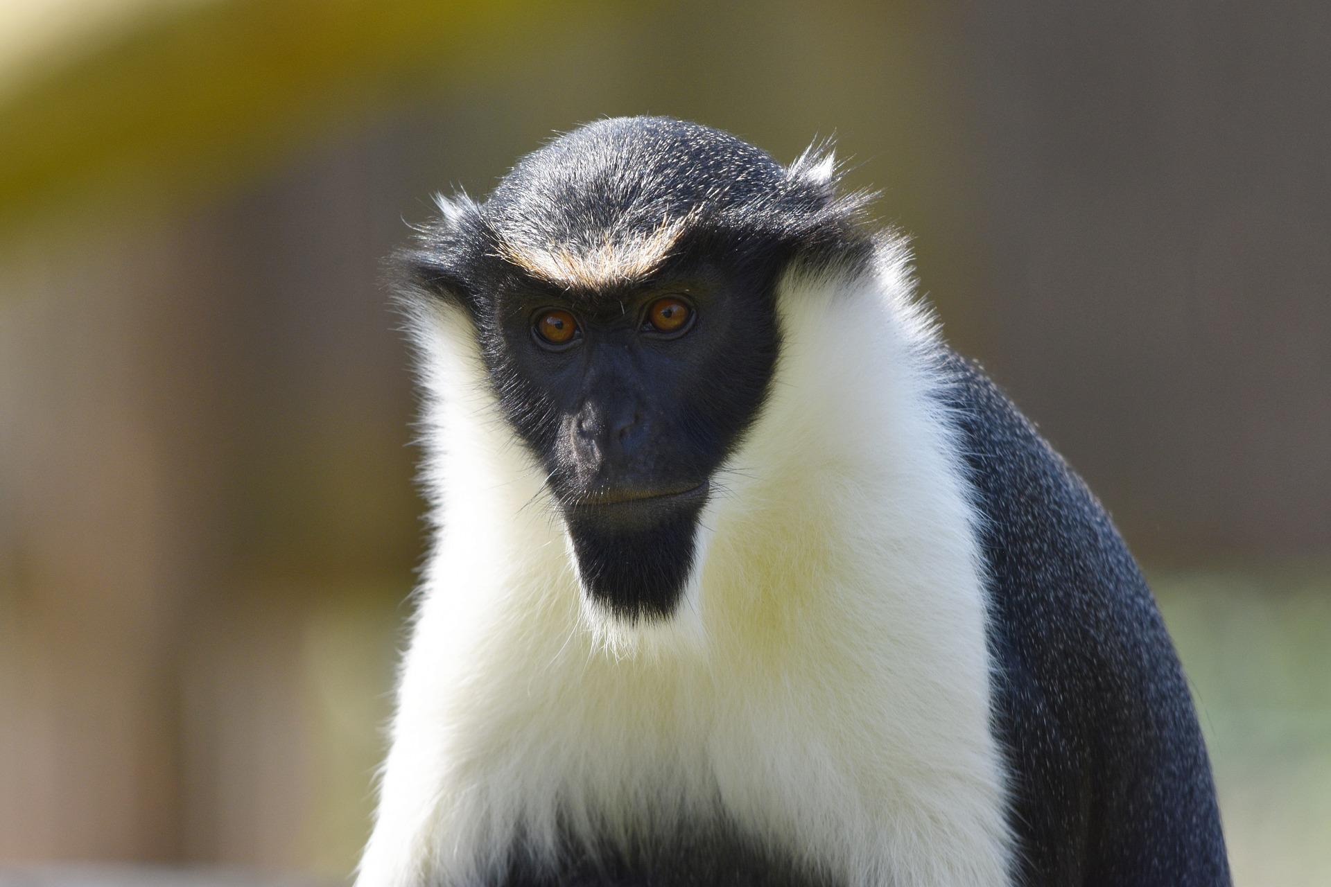 Lee más sobre el artículo Disuadiendo a gritos a los depredadores