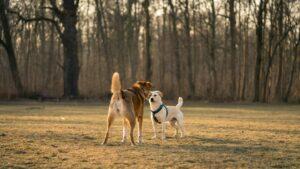Lee más sobre el artículo Pedir perdón. Versión animal