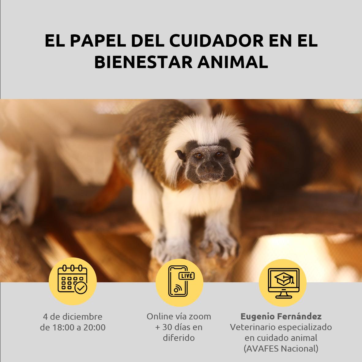 Lee más sobre el artículo El papel del cuidador en el bienestar animal