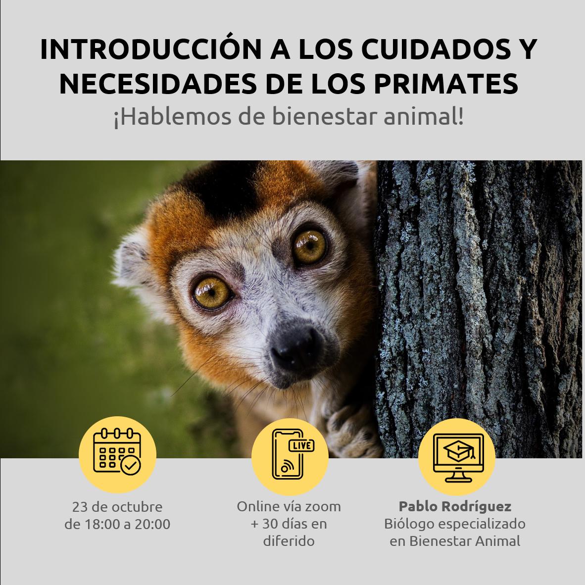 Lee más sobre el artículo Introducción a los cuidados y necesidades de los primates. ¡Hablemos de Bienestar Animal!
