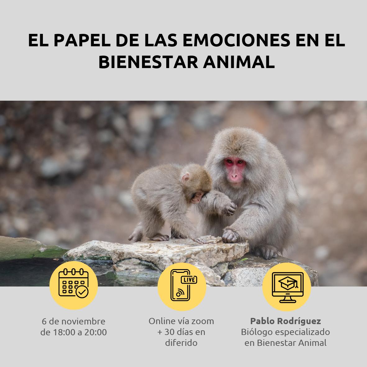 Lee más sobre el artículo El papel de las emociones en el bienestar animal