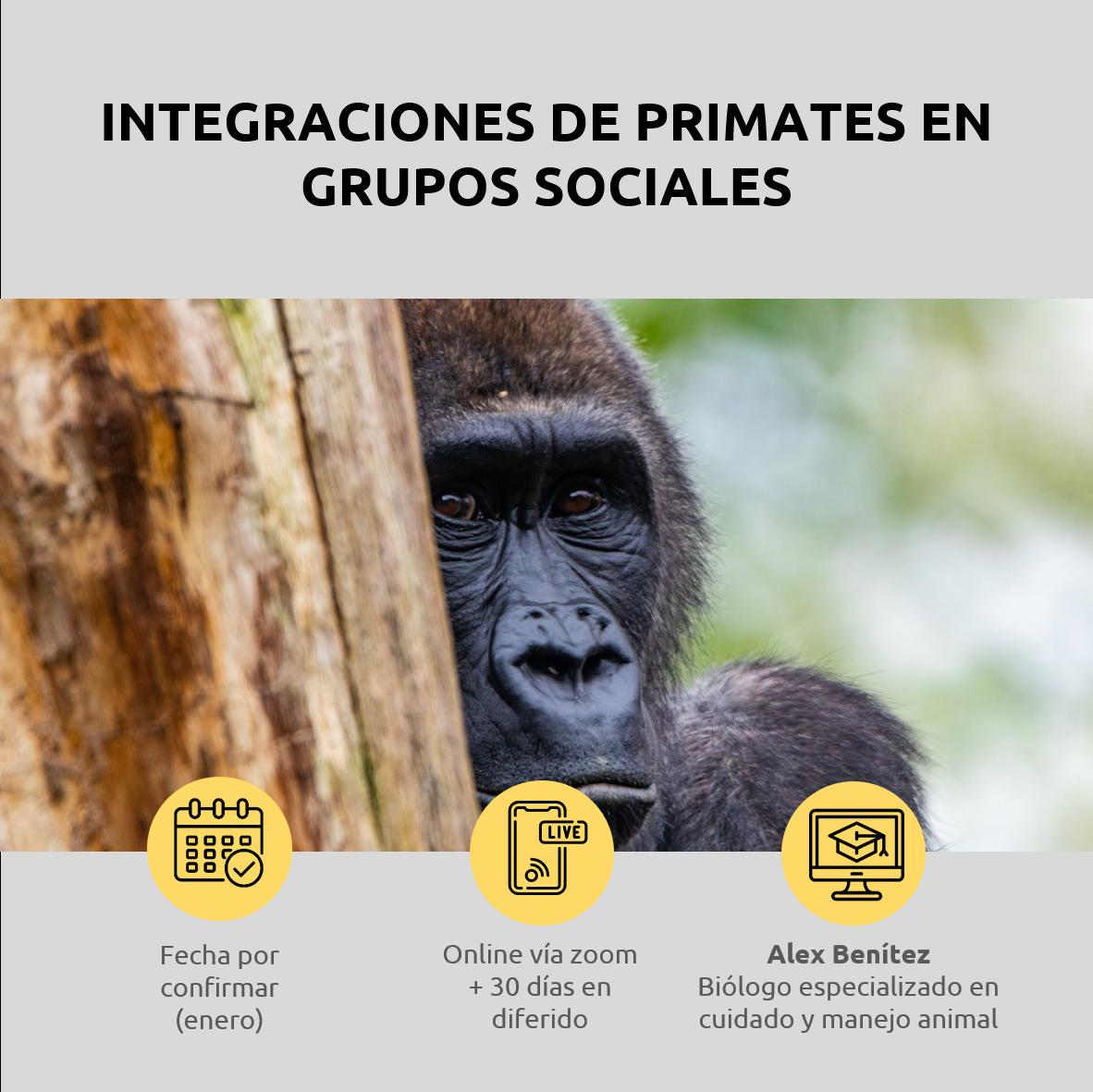 Lee más sobre el artículo Integraciones de primates en grupos sociales