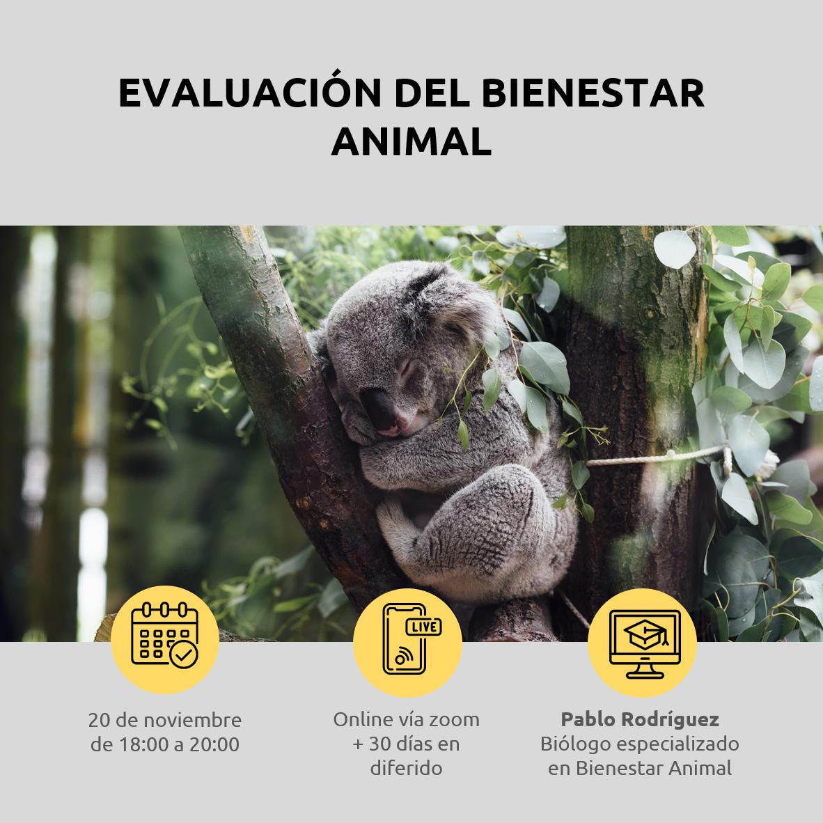 Lee más sobre el artículo Evaluación del bienestar animal